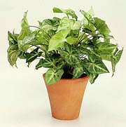 The feng shui of house plant healthy lifestyle - Plants for good feng shui ...