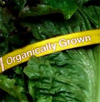 Organically Grown Vegetables