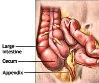 human-anatomy-appendix