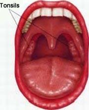 human-anatomy-tonsils