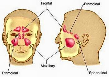 human-anatomy-sinuses